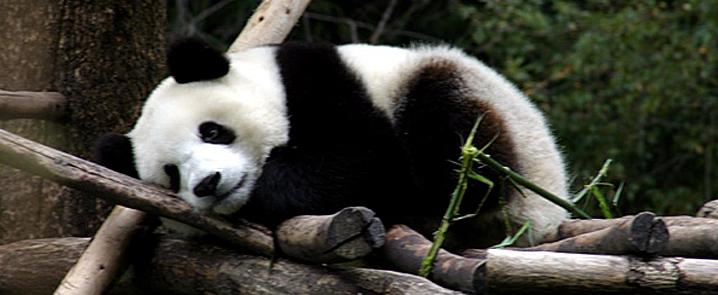 From Panda Hometown to Lhasa   Sichuan-tour.com